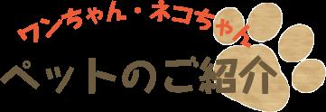 ワンちゃん・ネコちゃん ご紹介